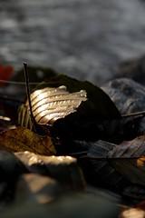 alone (CoconutRyo) Tags: germany munich flickrphotos efs1785 eos50d ganref