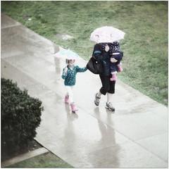 rainy sunday (beryl) Tags: park people texture wet grass square sandiego sidewalk rainy umbrellas museumofnaturalhistory squarecrop balboapark radlab paulgrand nikond90 pareeerica texturesquared