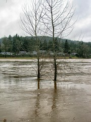 Trees (For Bunk) Tags: park trees tree oregon river portland flood submerged 2012 oregoncity clackamas clackamette