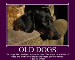 dog chien pet fdsflickrtoys hound canine dachshund perro hund wienerdog dackel teckel k9 jimmydean doxie sausagedog aplaceforportraits pointyfaceddog bonniewilcox