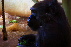 610-75L2 (Lozarithm) Tags: bristol picasa 1770 apes k5 bristolzoo blip justpentax pentaxzoom