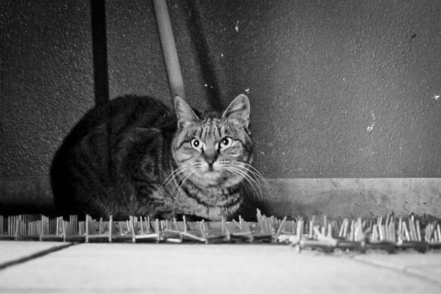 Today's Cat@2012-02-03