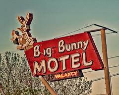 Bigs Bun (Pete Zarria) Tags: sign colorado neon motel denver pam