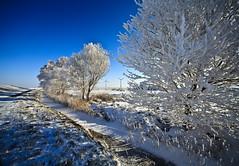Snow trees (Demis de Haan) Tags: trees snow holland tree ice amsterdam day snowy clear 13 windmolen zeedijk uitdam oosterpoel pwwinter