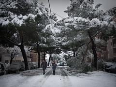 (totoro81) Tags: trees people snow rome roma walk neve piazza dei gerani nevearoma