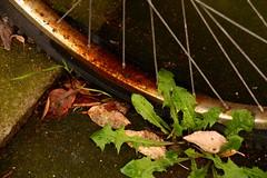 Fahrrad II (Febalx) Tags: alt speichen rost verrostet fahrrad platt kaputt brgersteig lwenzahn reifen verwittert witterung