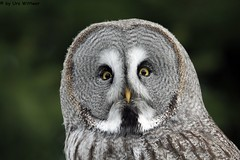 IMG_8403 (u.wittwer) Tags: park zoo schweiz switzerland tiere suisse tierpark heimat arth naturpark goldau widi