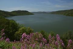 Lac du Salagou (Michel Seguret Thanks all for 8.300 000 views) Tags: france primavera nature spring flora nikon natur natura pro printemps flore frhling d800 herault salagou ruffes michelseguret