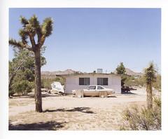 Joshua Tree, CA (kingqueenknave) Tags: california joshuatree