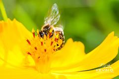 Abeille (Declic-Studio) Tags: color detail macro fleur beautifull bokhey