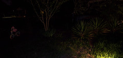 IMG_8640.CR2 (jalexartis) Tags: lighting nightphotography night yard dark landscape lights backyard landscaping shrub yucca shrubbery yuccaplant