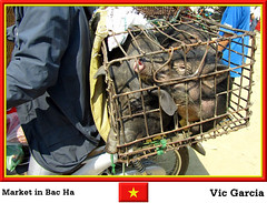 Market in Bac Ha (vicbrasil) Tags: people market vietnam hanoi sapa hilltribe cuong hoalu bacha northeastregion northwestregion redriverdeltaregion