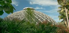 The tropical dome (image 2) (idunbarreid) Tags: blue sky gardens clouds palms dome tropical undergrowth platinumheartaward