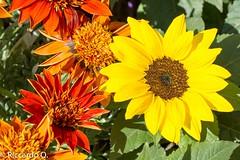 _DSC9234.jpg (Riccardo Q.) Tags: macro fiori fiore altreparolechiave floreka