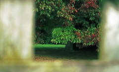Peak though the fence (Cruseon) Tags: trees green film fence hamilton nz waikato fujisuperia schneiderkreuznach diax