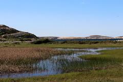 Tjurpannan, Naturreservat (annarkias) Tags: sea nature se seaside sweden outdoor bohusln tjurpannan