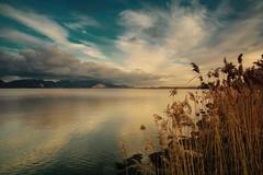 I colori del lago (f_foschi.) Tags: massaciuccoli viareggio lake lago toscana tuscany francesco foschi nikon d7100 lucca