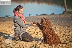 Labradoodle Lapa (Australijskie Labradoodle Wlochata Pasja) Tags: doodle labradoodle therapydogs dudle australianlabradoodle australijskilabradoodle labradoodleaustralijski allergyfriendlydogs