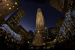 2011 Rockefeller Center Christmas Tree (gimmeocean) Tags: christmas nyc newyorkcity ny newyork tree rockefellercenter christmastree fisheye midtown hdr 30rock rockefellercenterchristmastree norwayspruce handheldhdr bower8mmfisheye theateamrallyingforaurelia