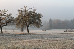 my kind of a scene.  CD7I7948 (andrey.salikov) Tags: mist ice nature rain fog wonderful germany photography photo movement haze photos hoarfrost gorgeous picture freezing rime scenes atmospheric drizzle hoar drizzling    icemosaic