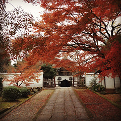 (yocca) Tags: autumn red topf25 leaves japan temple kyoto 100v10f momiji japanesemaple  botanic  4s iphone 2011 yogenin  instagram dec2011