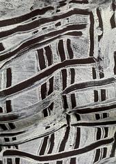 Karo warrior chest make up - Omo Ethiopia (Eric Lafforgue) Tags: artistic culture tribal ornament tribes bodypainting tradition tribe ethnic rite tribo adornment pigments ethnology tribu omo eastafrica äthiopien etiopia ethiopie etiopía 2642 エチオピア etiopija ethnie ethiopië 埃塞俄比亚 etiopien etiópia 埃塞俄比亞 etiyopya אתיופיה nomadicpeople эфиопия 에티오피아 αιθιοπία 이디오피아 種族 етиопија 衣索匹亚 衣索匹亞 peoplesoftheomovalley