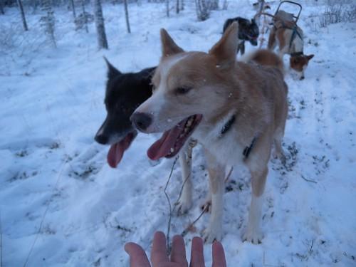 111206_Lappland_ 082