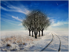 Regrouping (Jean-Michel Priaux) Tags: blue trees winter sky white snow france cold ice nature car photoshop plane painting landscape trace line alsace montage neige paysage froid hdr empreinte chrismas plaine ried courve naturepoetry priaux marckolsheim alwaysexc bestcapturesaoi mygearandme flickrstruereflection1