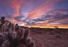 A Cactus Dreams in Color (Cliff_Baise) Tags: