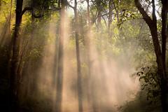 Dusty Dawn (Chris Willis 10) Tags: trees light people sunlight india dawn wildlife tiger safari jungle dust kanha ilobsterit