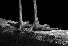 Claws of Night - IMG_2266-Edit (Swaranjeet) Tags: vacation india canon switzerland europe niceshot photos zurich 7d favourites thane mumbai singh sjs 2011 eoe apsc swaran eos7d sjsphotography blinkagain swaranjeet ingalleries swaranjeetsingh swaranjeetphotography sjsvision