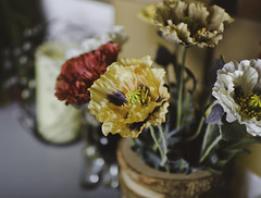you've seen me before... (mariosworld343) Tags: flowers love beauty 35mm prime nikon colorful dof bokeh n fake sharp dx alienbees 14g strobist ab800 d7000