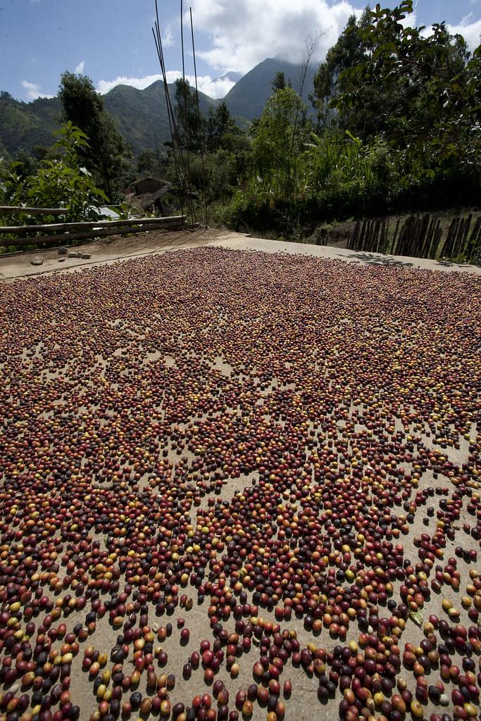 Producteurs de cafe - Base de CEPICAFE
