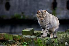 Cats :: Cat Village, Taipei (bgfotologue) Tags: cats station taiwan taipei     houtong  catvillage