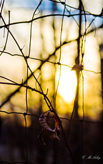 (mamamac2010) Tags: trees sunset sunlight leaves fence squares branches bluesky calm explore serenity barbedwire 52weeks2012