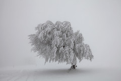 single (crazyhorse_mk) Tags: winter snow cold tree fog germany foggy baden schwarzwald blackforest schauinsland badenwuerttemberg stohren giesshuebel windbeech