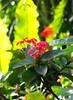 untitled (roydex) Tags: flowers x5 gex5