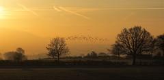 Daybreak (Natasha Bridges) Tags: morning trees winter light birds sunrise dawn fields wrekin