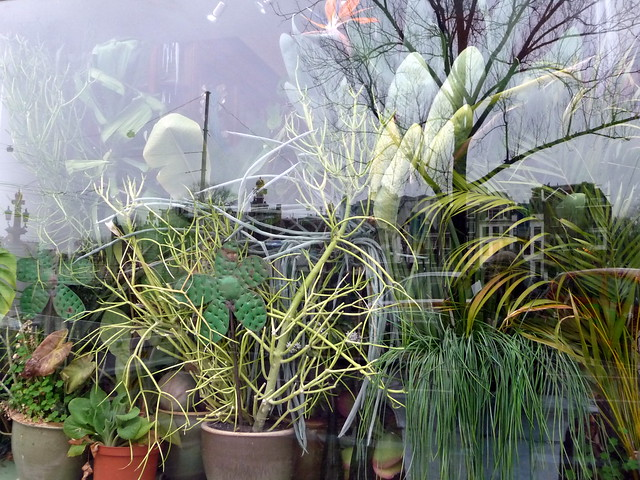 Plant aardig