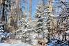 The beauty of the season (howardj47) Tags: canon t3i howardj
