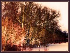 Winter River Tree: Yellow and Brown (Tim Noonan) Tags: winter snow tree art ice yellow photoshop river tim branches vivid manipulation imagination shining mosca hypothetical tistheseason digi vividimagination artdigital shockofthenew sotn sharingart maxfudge awardtree maxfudgeexcellence maxfudgeawardandexcellencegroup daarklands trolledproud magiktroll exoticimage digitalartscene netartii digitalartscenepro