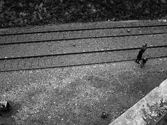 (^ C o r t é s T r i a n a) Tags: street urban paris france belleville explore parís menilmontant aplusphoto artlegacy bwartaward