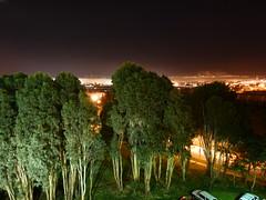 looks like broccoli (army.arch) Tags: california ca city trees fog night photography southsanfrancisco