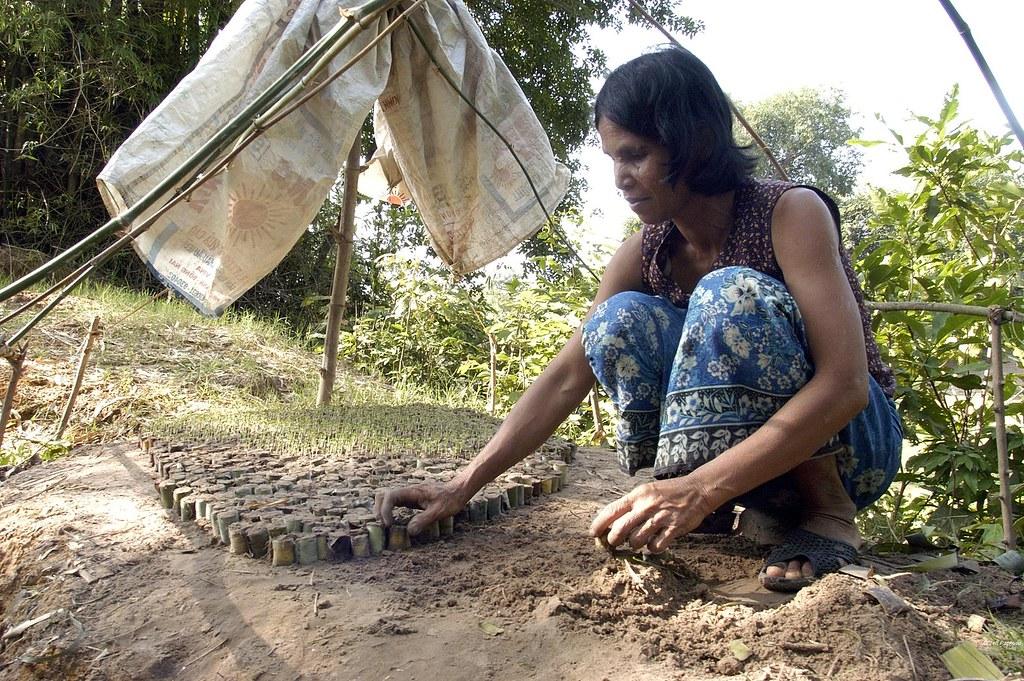 femme préparant des jeunes pousses pour nourrir les animaux - JF.Pachoud_AVSF