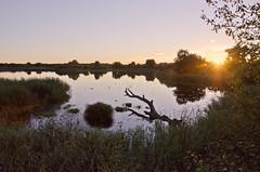(matthieupigeau) Tags: sunset naturaleza lake france nature landscape lago golden wildlife lac paisaje paysage francia dorado sauvage dor dorada brenne
