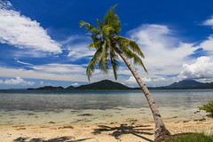 Pohon Kelapa di Pantai Ketapang | Lampung
