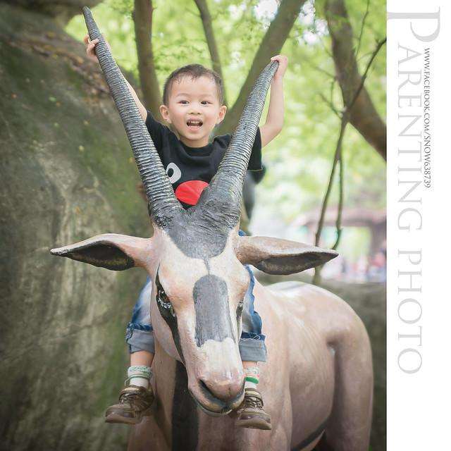 對只有3歲的小赫來說  路邊可以騎的動物 比欄柵裡會動的還吸引他 XD