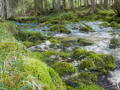 Strummen 2014 (turbok) Tags: bach landschaft moose pflanze strummen wasser wildpflanzen c kurt krimberger