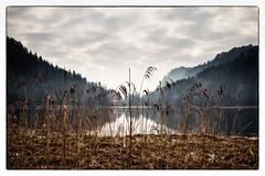 Alatsee, Bavaria (08dreizehn) Tags: lake reflection fog germany bayern deutschland bavaria see europa europe nebel lac allemagne spiegelung brouillard morgens fssen allgu rflexion alatsee olympusm17mmf18 olympuspenepl7 08dreizehn nullachtdreizehn thomashassel