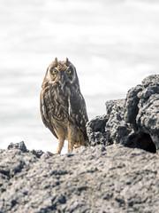 P4233066 (olavagnar) Tags: island islands ecuador do pacific darwin olympus galapagos charlesdarwin pacificocean to equator archipelago 2016 galpagos galapagosislands galpagosislands archipilagodecoln islasgalpagos galpagosnationalpark galpagosmarinereserve